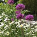 Bulb planting – volunteers needed!